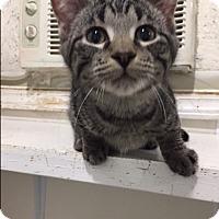 Adopt A Pet :: Flynn - Ashland, OH
