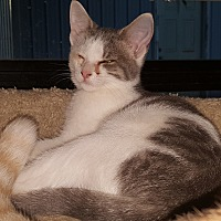 Adopt A Pet :: 1Sarah - Delmont, PA