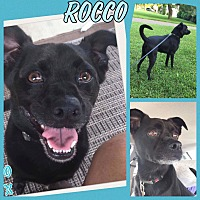 Adopt A Pet :: Rocco - Tomah, WI
