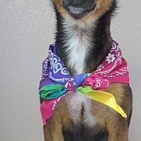 Adopt A Pet :: Sweetpea - Manning, SC