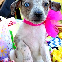 Adopt A Pet :: Liza Jane - Batesville, AR