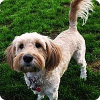 Adopt A Pet :: Millie - Gilbert, AZ