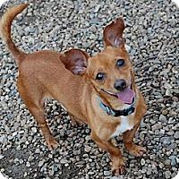 Adopt A Pet :: Frankie - Virginia Beach, VA