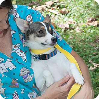 Terrier (Unknown Type, Small) Mix Dog for adoption in New Martinsville, West Virginia - Maxie