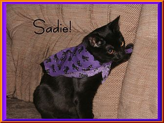 Domestic Mediumhair Kitten for adoption in Santa Clarita, California - Sadie