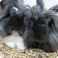 Adopt A Pet :: Kahuna & Lucia - Newport, DE