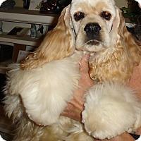 Adopt A Pet :: Chanel -Adopted! - Kannapolis, NC