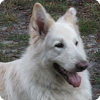 Adopt A Pet :: Finn - Green Cove Springs, FL