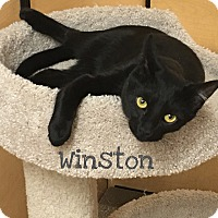 Adopt A Pet :: Winston - Foothill Ranch, CA