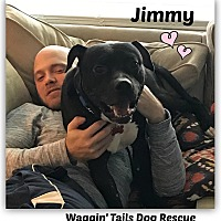 Adopt A Pet :: Jimmy - Northville, MI