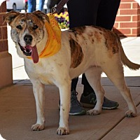 Australian Shepherd Mix Dog for adoption in Rockville, Maryland - Muffin