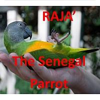 Adopt A Pet :: RAJA The Senegal Parrot - Vancouver, WA