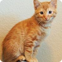 Adopt A Pet :: Lafayette - Colorado Springs, CO