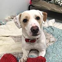 Adopt A Pet :: Jersey - Binghamton, NY