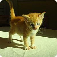 Adopt A Pet :: Brulee - Duluth, GA
