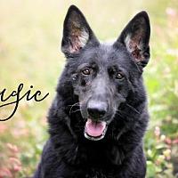 Adopt A Pet :: Magic - Joliet, IL