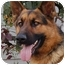 Photo 3 - German Shepherd Dog Dog for adoption in Los Angeles, California - Rolf von Ritterhaus