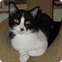 Adopt A Pet :: Smudge - Mission Viejo, CA