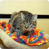 Adopt A Pet :: Lilly - Farmingdale, NY