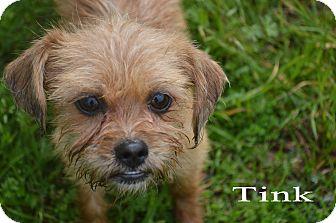 Terrier (Unknown Type, Small) Mix Dog for adoption in Texarkana, Arkansas - Tink