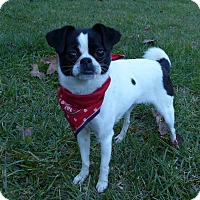 Adopt A Pet :: Ivy - Mocksville, NC