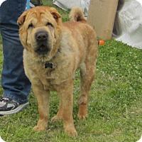 Adopt A Pet :: Riddles - Houston, TX