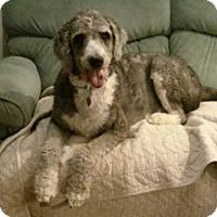 Adopt A Pet :: PUPA - Melbourne, FL