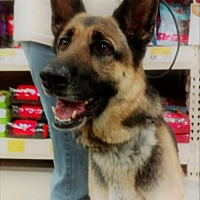 Adopt A Pet :: Bella - Logan, UT