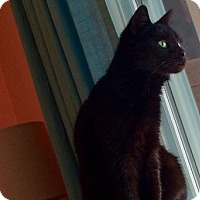Adopt A Pet :: Velvet - Stafford, VA