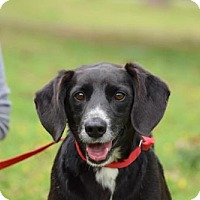 Adopt A Pet :: Sam Waterston - Brooklyn, NY