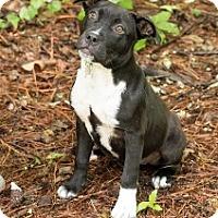 Adopt A Pet :: Edna - Big Canoe, GA
