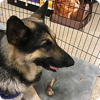 Adopt A Pet :: Jake-Referral - Dripping Springs, TX