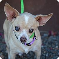Adopt A Pet :: Cora - Phoenix, AZ