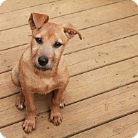 Adopt A Pet :: Emery (Has Application) - Washington, DC