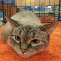 Adopt A Pet :: BEYA - Powder Springs, GA