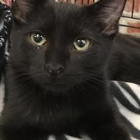 Adopt A Pet :: Teka - Boonville, MO