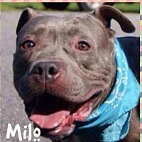 Adopt A Pet :: Milo - Gainesville, GA