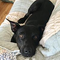 Adopt A Pet :: Katy - Long Beach, NY