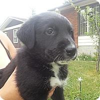 Adopt A Pet :: Bear - Calgary, AB