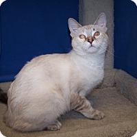 Adopt A Pet :: K-Ellie4-Blossom - Colorado Springs, CO