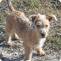 Adopt A Pet :: Blake - Lockhart, TX