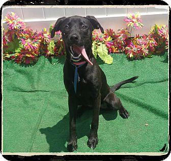 Labrador Retriever Mix Dog for adoption in Marietta, Georgia - TALIA