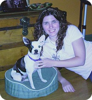 Jack Russell Terrier Mix Dog for adoption in Winfield, Pennsylvania - Isabella