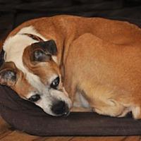 Adopt A Pet :: Dolly - Bremo Bluff, VA