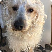 Adopt A Pet :: Francois - San Francisco, CA