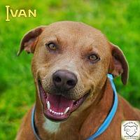 Adopt A Pet :: Ivan - Washburn, MO