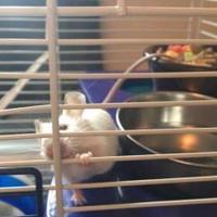 Adopt A Pet :: Phoenix - Edmonton, AB