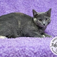 Adopt A Pet :: 2435 - Lake City, MI