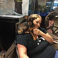 Adopt A Pet :: Tanya - Pompano Beach, FL