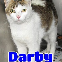 Adopt A Pet :: #116 Darby - Lawrenceburg, KY